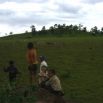 7. Cattle free to Roam on minefield area